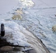 Polar bears approach USS Honolulu, a Los Angeles-class fast attack submarine (credit: Arctic Submarine Laboratory, 2003)